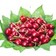 Many red wet cherry fruits (berries) on green leaves in round pl - Stock Photo