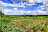 Agricultural field in a sunny day in Belarus — Stock Photo