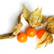 Physalis isolated on white — Stock Photo