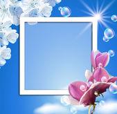 Sky and magnolia — Stock Photo