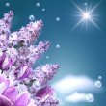 Lilac, tulip and mamgnolia — Stock Photo #5733258