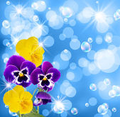 Pansy and bubbles — Stock Photo