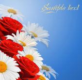 雏菊和玫瑰 — 图库照片