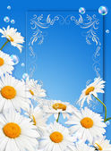 Daisies against the sky — Stock Photo