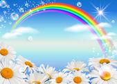 Prästkragar och rainbow mot himlen — Stockfoto