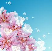 Lily en bubbels — Stockfoto