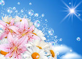 Margaritas y lily — Foto de Stock