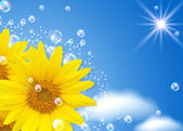 Sunflower and bubbles — Foto Stock