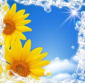 Sky and sunflowers — Stock Photo
