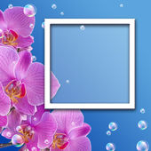 Orchid and photo frame — Stock Photo