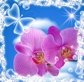 Orchid and transparent butterfly — Stock Photo