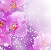 Orchid and bubbles — Stock Photo