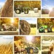 Agriculture background — Stockfoto