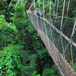 Canopy bridge — Stock Photo #6683086