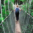 Canopy bridge - Foto de Stock  