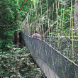 Stock Photo: Canopy bridge