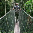 Stockfoto: Canopy bridge