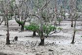 Parco nazionale di bako — Foto Stock