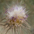 Stock Photo: Prickle close up
