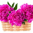 Basket of peonies, isolated on white — Stock Photo