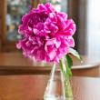 Burgundy peony in vase — Stock Photo