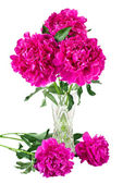 Bouquet of peonies in vase — Stock Photo