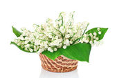 Bouquet of lilies of the valley in basket — Stock Photo