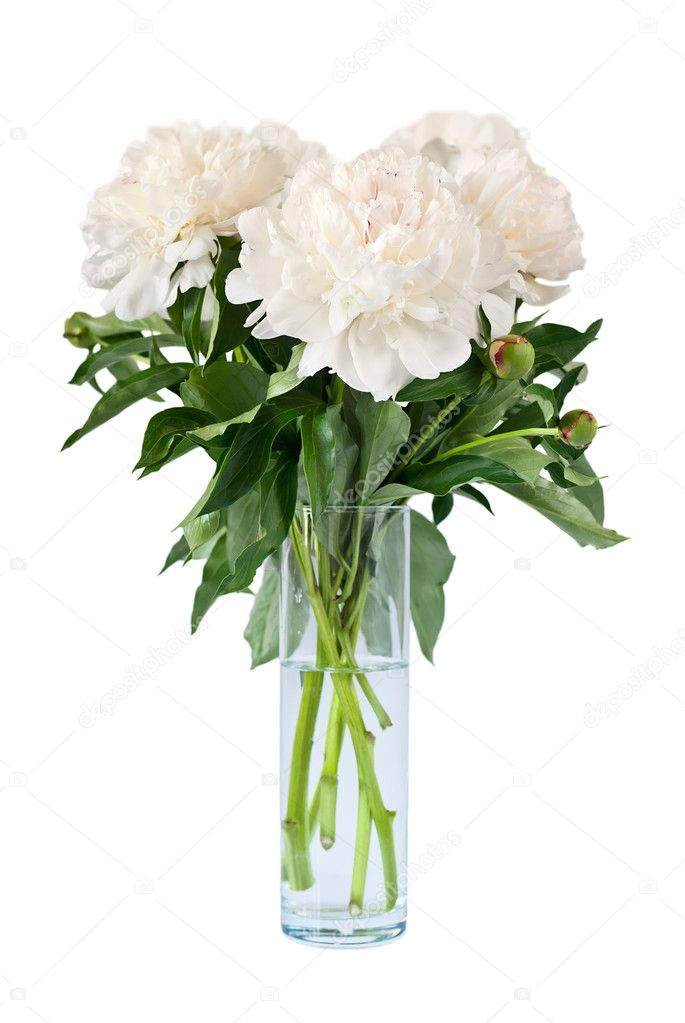 Bouquet Of Peonies In Vase Stock Photo Am Wolna 6601006