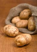 Skörda potatis — Stockfoto