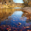 Autumn leaves in the water — Stock Photo #6075186