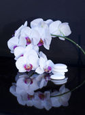 White orchid whis stones — Stock Photo