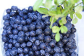Bowl of fresh blueberries — Stock Photo
