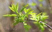 Groene lente boom laat — Stockfoto