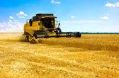 Combineren harvester — Stockfoto