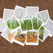 Grown grass, collage of photos for your design — Stock Photo