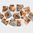 Stock Photo: Funny orange cat, collage of photos for your design