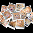 Stock Photo: Funny orange kitten, collage of photos for your design