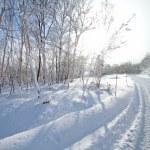 Winter landscape — Stock Photo #5429059