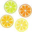 Slices of citrus fruits — Stock Vector