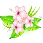Hibiscus flowers — Stock Photo