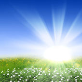 Flower meadows with shining sun — Stock Photo