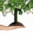 Money Tree — Stock Photo #5692969