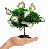 Peníze strom — Stock fotografie