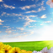 Green meadows with flowers — Stock Photo