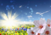 Flower fields — Stock Photo