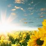 Flower fields — Stock Photo #5761334