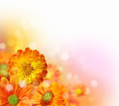 Colourful flower background — Stock Photo