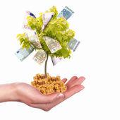 árbol del dinero — Foto de Stock