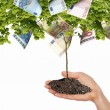 Money Tree — Stock Photo #5782758