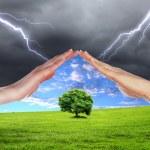 mänskliga händer skydda träd — Stockfoto #5795851